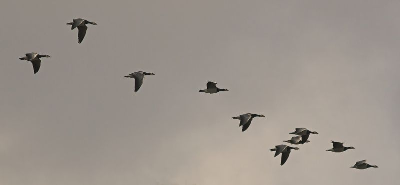 Image of migrating birds