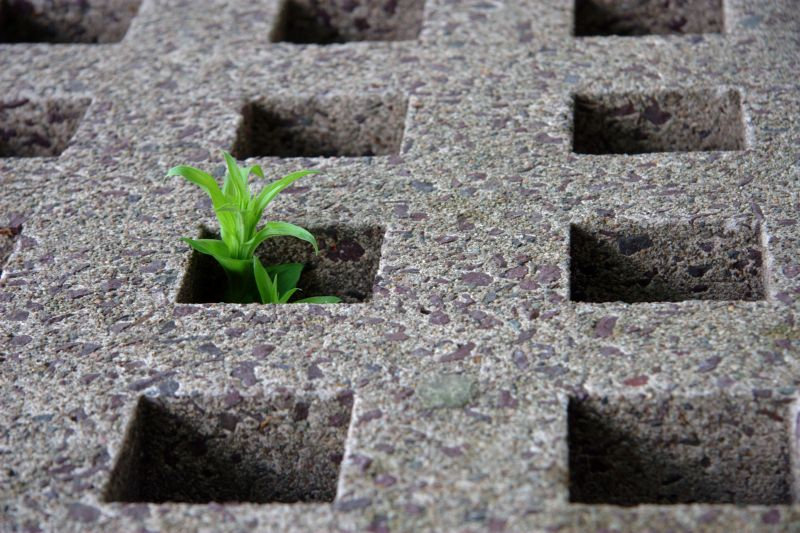Image of Plant growing through a hole in cement