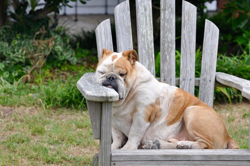 Image of a dog sleeping in a chair outdoors
